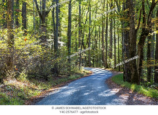 Early morning sun in woods on dirt gravel road into Greenbrier area of Great Smoky MOuntains National Park in Tennessee