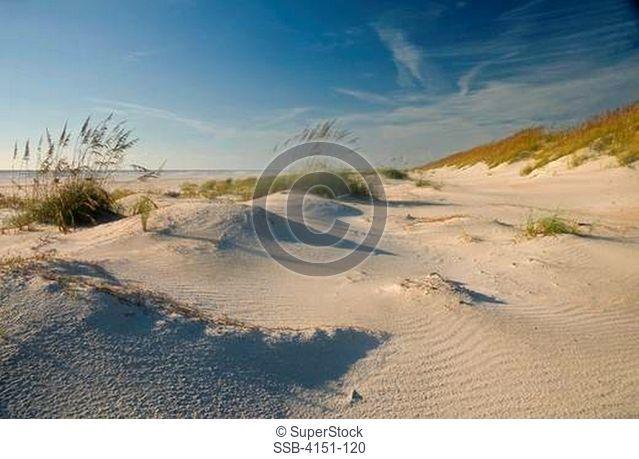 USA, Florida, Anastasia State Park, Sand dune