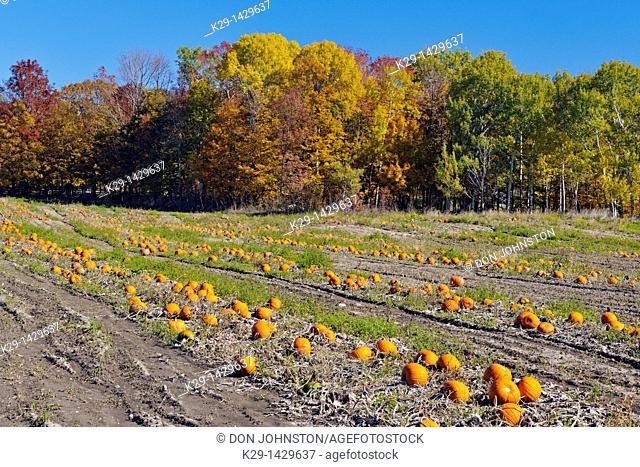 Pumpkin Farm Manitowaning Manitoulin Island Ontario
