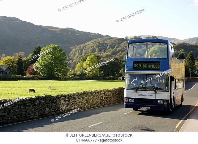 UK, England, Cumbria, The Lake District, Grasmere. Double decker tour coach bus, stone wall, pasture, grazing sheep