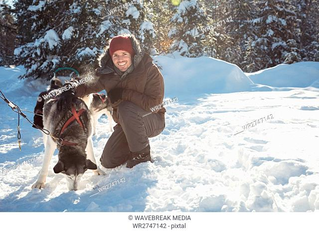 Smiling musher tying husky dogs to the sledge