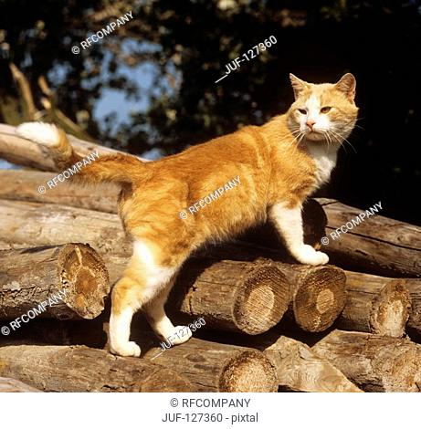 domestic cat on stack of wood
