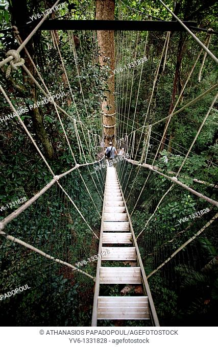 Photograph of people wandering on the canopy walkways at Taman Negara the world's oldest rainforest, TAMAN NEGARA, CENTRAL PAHANG, MALAYSIA