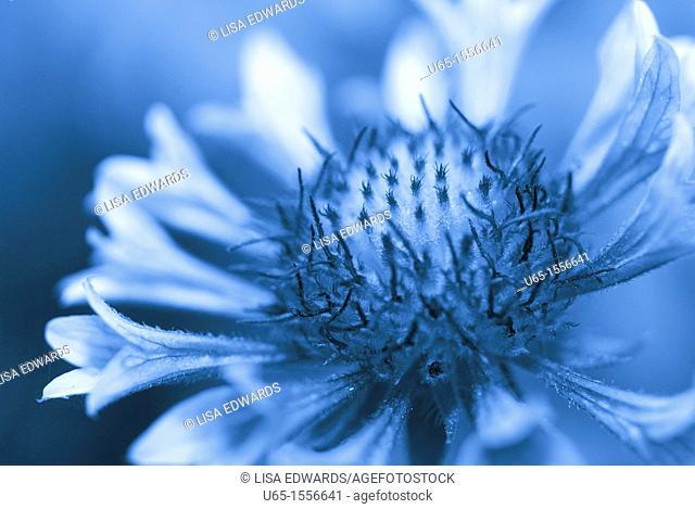 Flower with trumpet petals