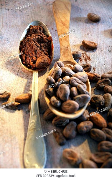 Still life with roasted cocoa beans and cocoa in spoon