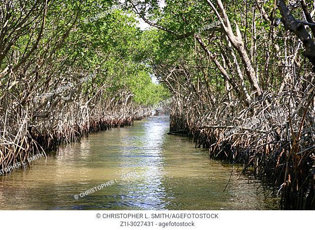 Mangrove swamps around Everglades City in South Florida USA