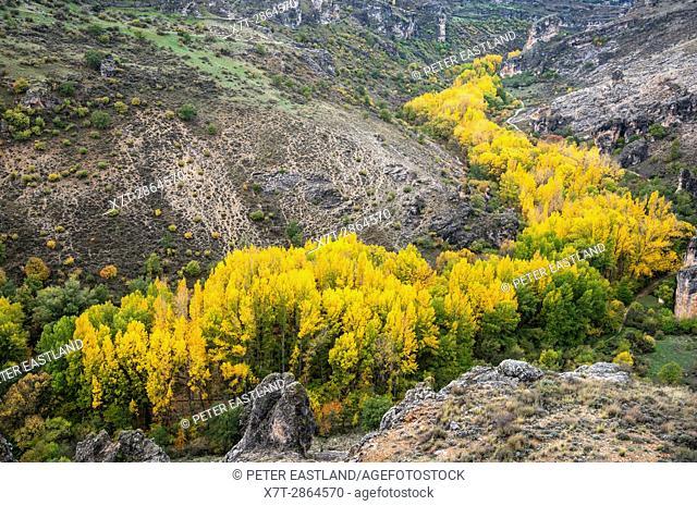Autumn in the Barranco del Rio Dulce Natural Park. Guadalajara province. Spain
