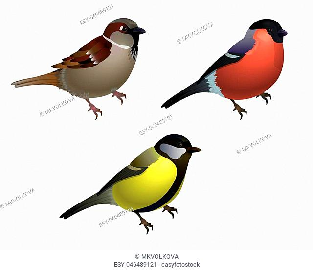 Set of 3 birds - sparrow, tit and bullfinch. Realistic isolated on white bacground