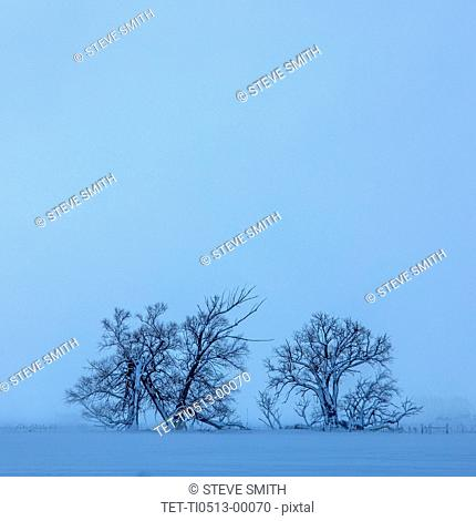 Tree in field during winter
