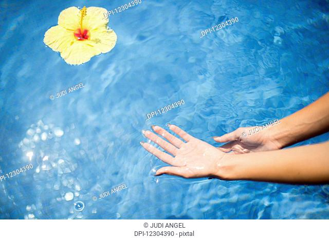 Dipping hands in the water with a floating flower; Island of Hawaii, Hawaii, United States of America