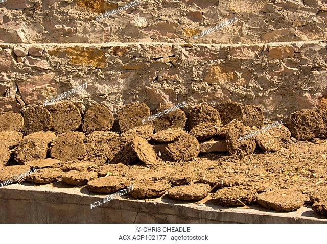 Drying cow dung for fires, Jaipur, Rajastan, India