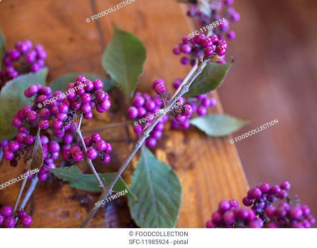 Sprigs of purple beautyberry (Callicarpa)