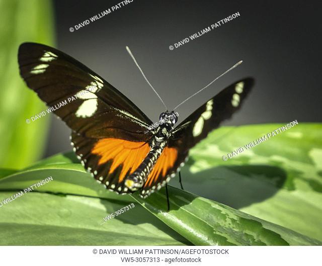 Monarch Butterfly, Calgary Zoo, Alberta, Canada