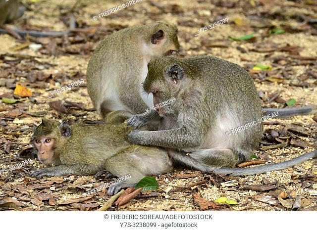 Wild monkey at Phnom Tamao Wildlife Rescue Center,Takeo Province,Cambodia,South east Asia