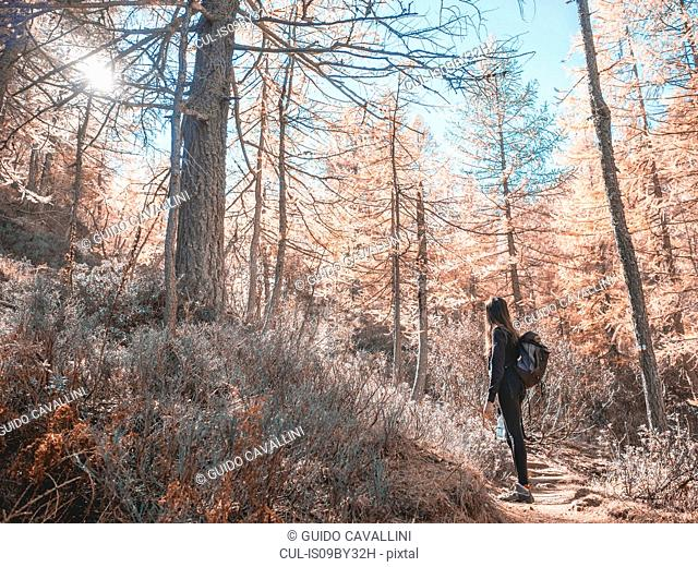 Woman exploring forest, Antronapiana, Piemonte, Italy