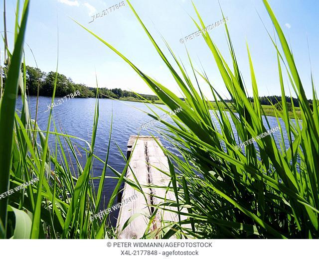 carp pond, Austria, Lower Austria, Waldviertel