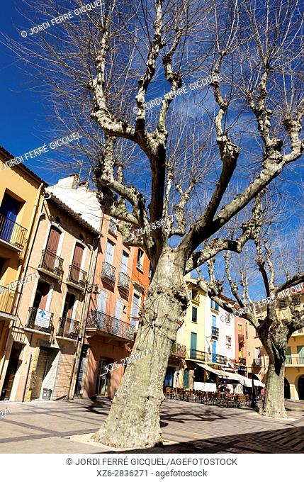 Coloured and typical street, Collioure or Cotlliure, Pyrénées-Orientales, Occitanie, France, Europe