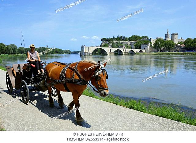 France, Vaucluse, Avignon, Saint Benezet bridge on the Rhone dating from the 12th century with in the background Cathedral of Doms dating from the 12th century...