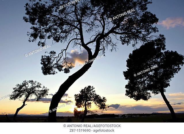 Los Pandos estate, Almansa, Albacete province, Castilla-La Mancha, Spain