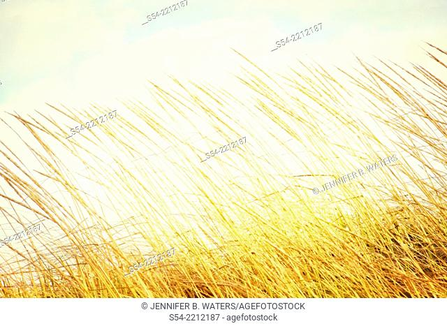 Colorful grasses outdoors
