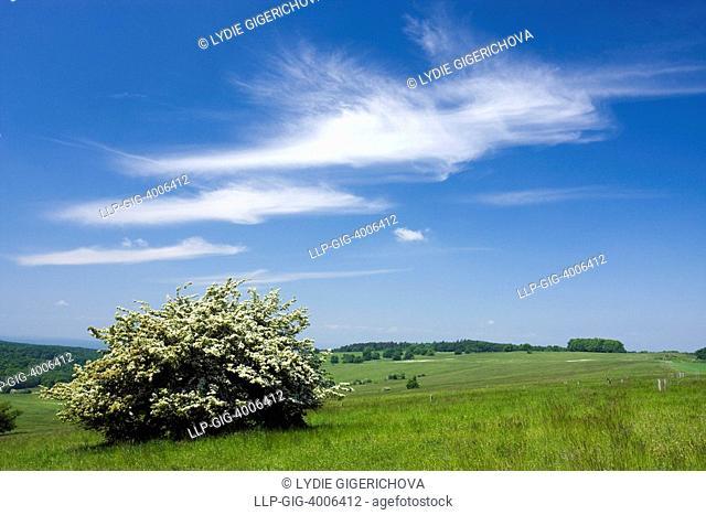 Landscape, Vyzkum hill, Bile Karpaty, White Carpathian Mountains, protected landscape area, South Moravia, Czech Republic, Europe