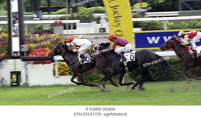 Horse racing at Shatin race course, Hong Kong