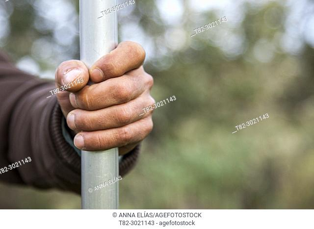 close-up hand of shepherd with rod in the pasture, Andévalo, Huelva, Andalucia, Spain