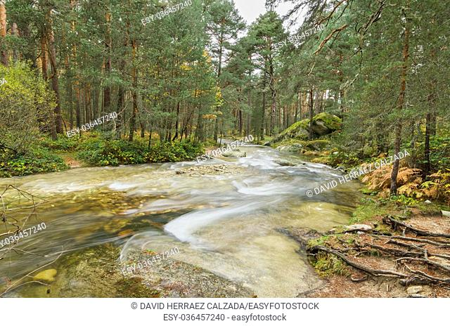 Scenic view of a river in the forest in Boca del Asno natural park on a rainy day in Segovia, Spain
