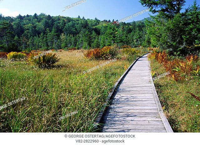 Flag Glade, Highlands Scenic Highway, Cranberry Glades Botanical Area, Monongahela National Forest, West Virginia