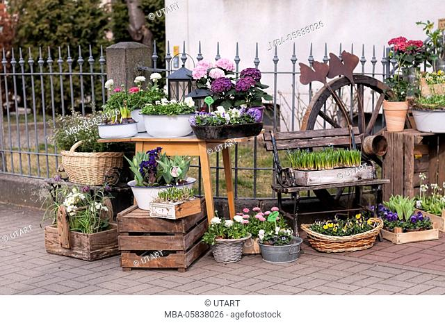 Outside of a flower shop, on offer many Frühblüher and flowers