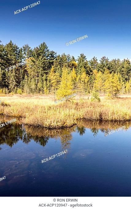 Wetlands along the Mizzy Lake trail in Algonquin Provincial Park, Ontario, Canada