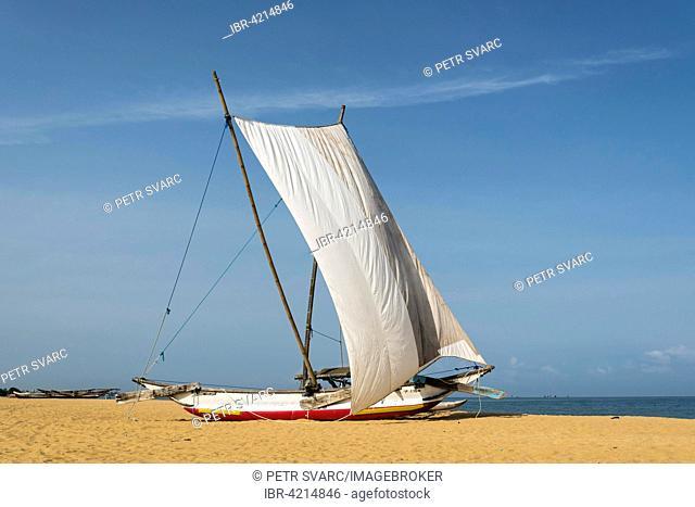 Traditional catamaran fishing boat, aka oruva, with a white sail on the sand of Negombo beach, Sri Lanka