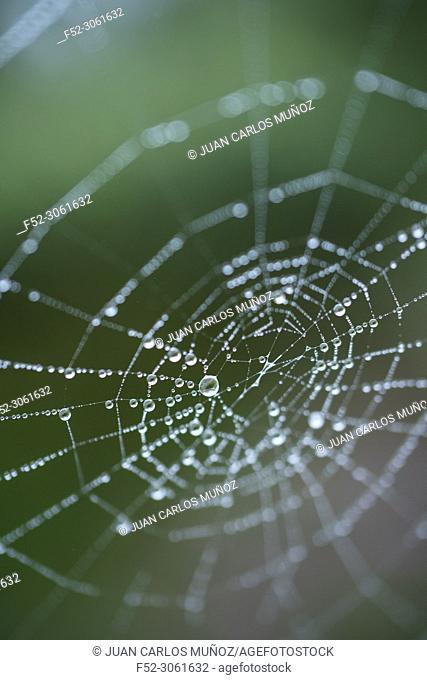Spider web, spider, Néouvielle Nature Reserve, Vallée d'Aure, L'Occitanie, Hautes-Pyrénées, France, Europe