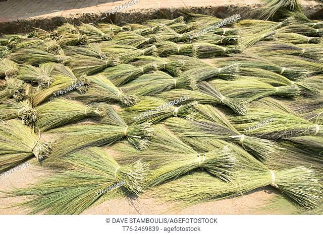 Bundles of rice straw in rural Laos