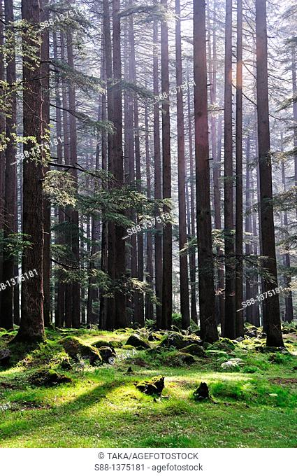 Quietness in the forest