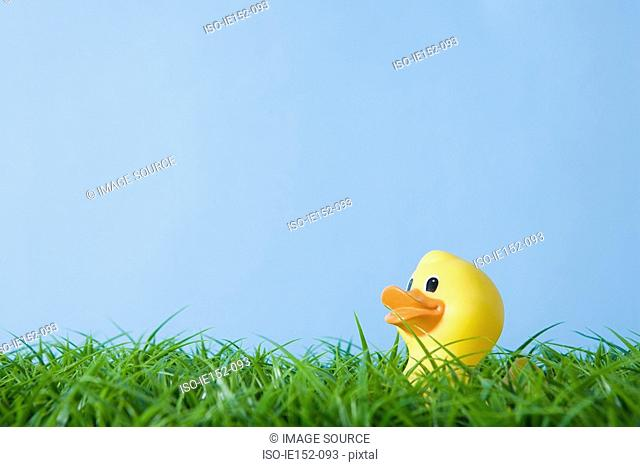 A rubber duck
