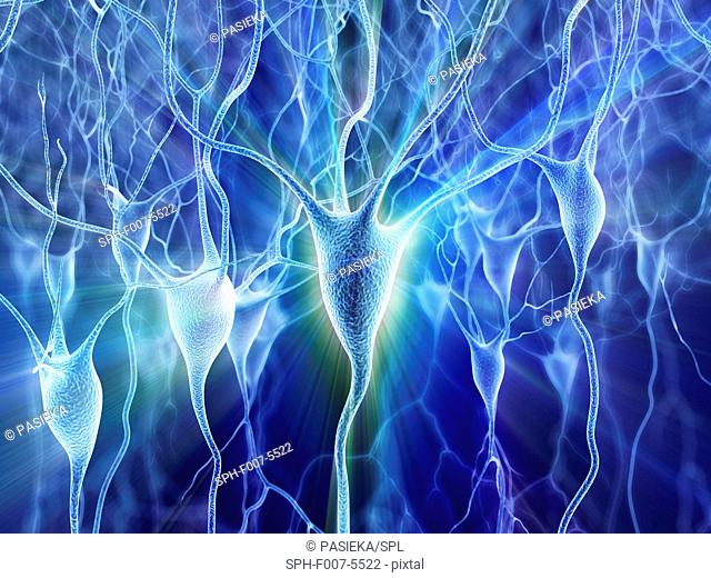 Computer artwork of nerve cells, also called neurons. Neurons are responsible for passing information around the central nervous system (CNS) and from the CNS...