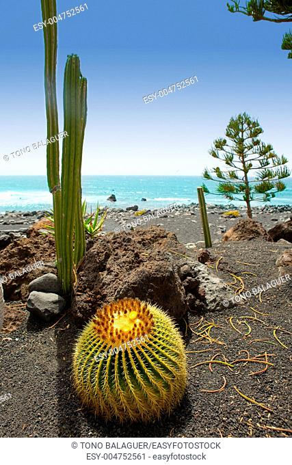 El Golfo in Lanzarote cactus of Atlantic shore at Canary Islands