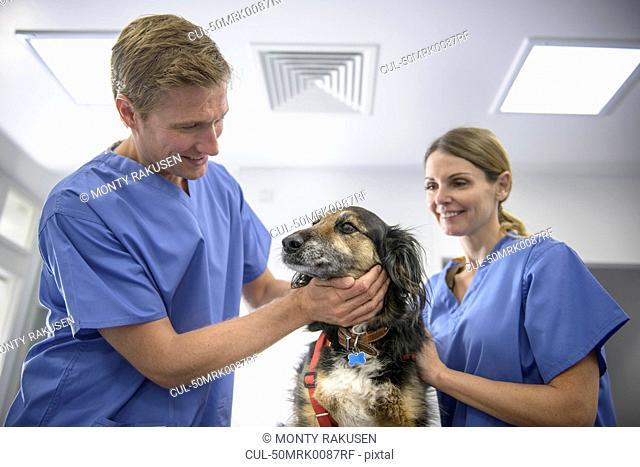 Veterinarians examining dog in office