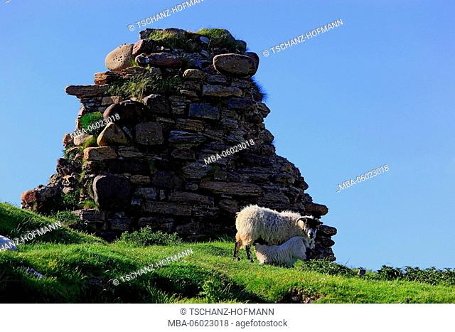 Scotland, the Inner Hebrides, Isle of Skye, Trotternish peninsula landscape in Duntulm with ruins and sheep