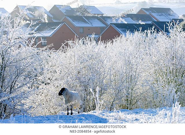 A winter landscape, Builth Wells, Powys, Wales, UK