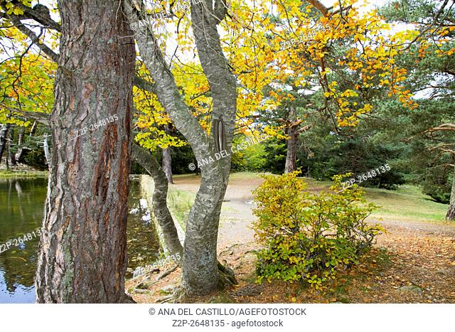 Autumn colors Bassa de Oles, lake near to Gausac, Valle de Aran, lleida, Catalonia, Spain