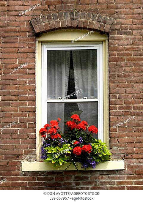 Window flower box on a building in Turners Fallas, MA, USA