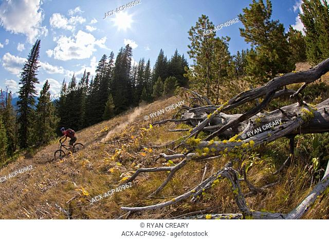 A middle aged male mountain biker rides the perfect singletrack trails of Spruce Lake Protected Area, Southern Chilcotins, British Columbia, Canada