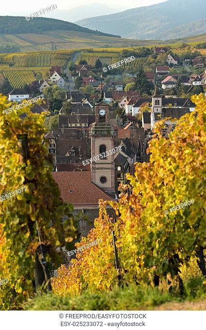 Alsace village, vineyard, Riquewhir, France, Europe, Automn