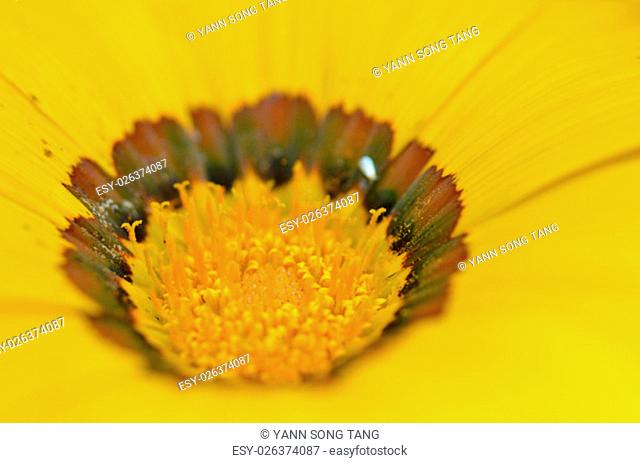 Beautiful flower in a meadow, close up micro
