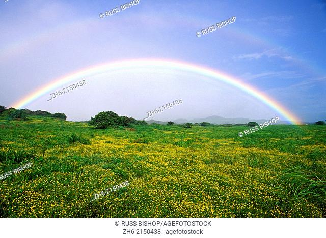 Double rainbow over wildflowers in the Kohala Mountains, The Big Island, Hawaii USA