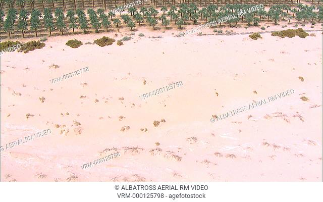 Aerial photograph of Date Palms in Desert
