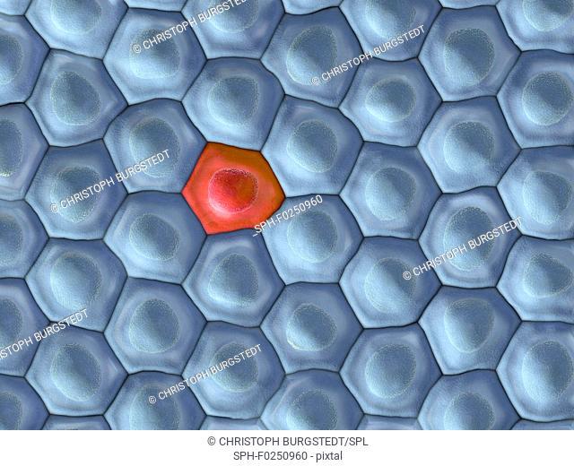 Cells, illustration