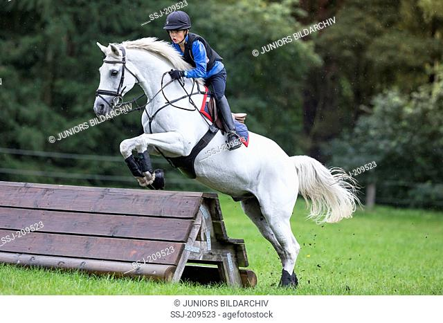 German Riding Pony. Boy on a gray gelding negotiating an obstacle during a cross-country ride. Germany